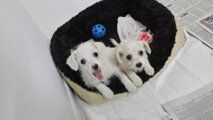 Two of the very happy puppies that found homes!