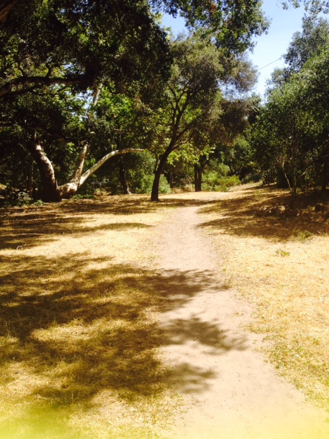 """Walking along a path on a beautiful Sunday at Stevens Park. Perfect place to have a picnic and barbecue as well on beautiful SB weekends!"" -Sujin Chon"