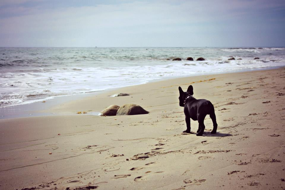 """The best things in life are dogs and the ocean."" -Kari Jensen"