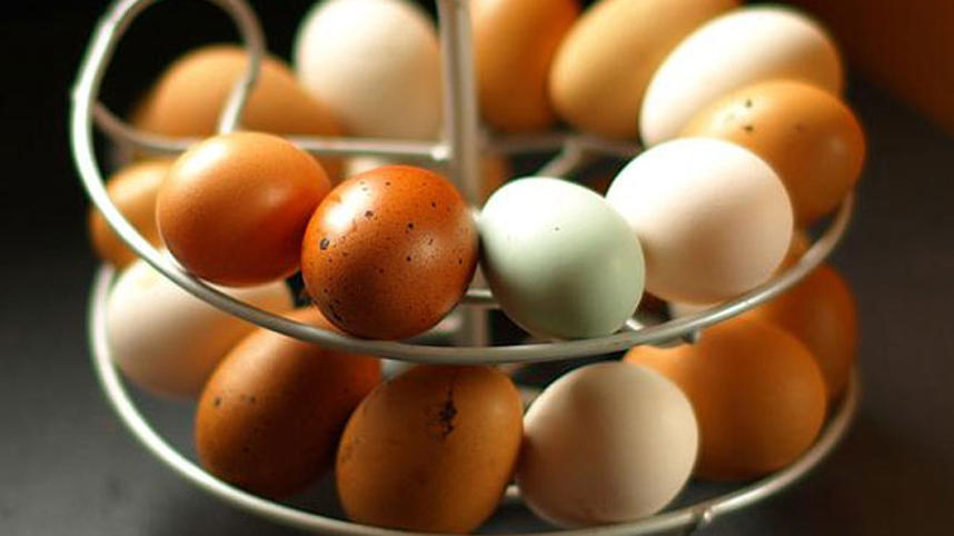 Eggs provide protein for optimum brain health