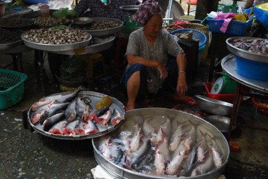 With over 4.2 million fishes caught each year, Thailand is under the Top 10 of world's biggest fishery countries