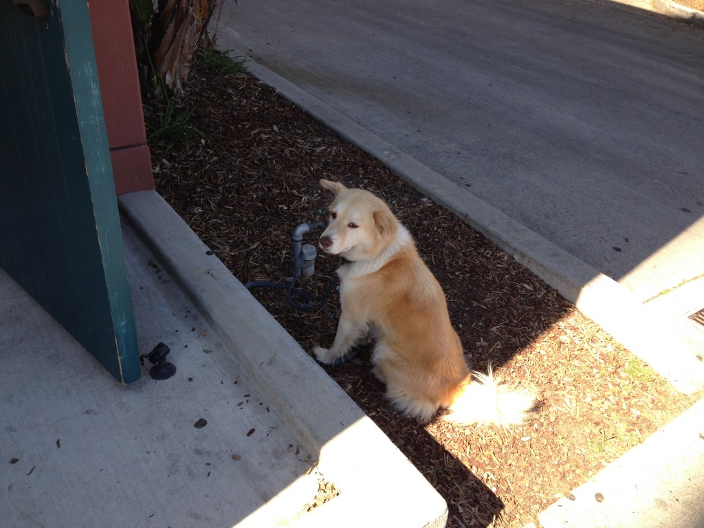 """Cute dog spotted outside Antioch waiting patiently for his owner"" (Picture by Kirstine)"