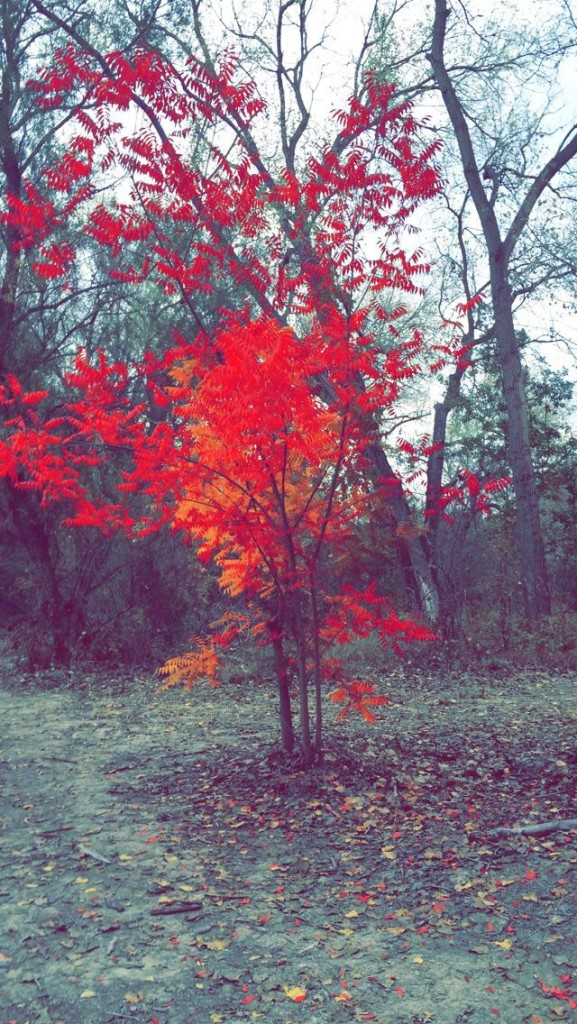 """Finding cool trees on a hike is always fun"" Picture by Marissa Kochan"