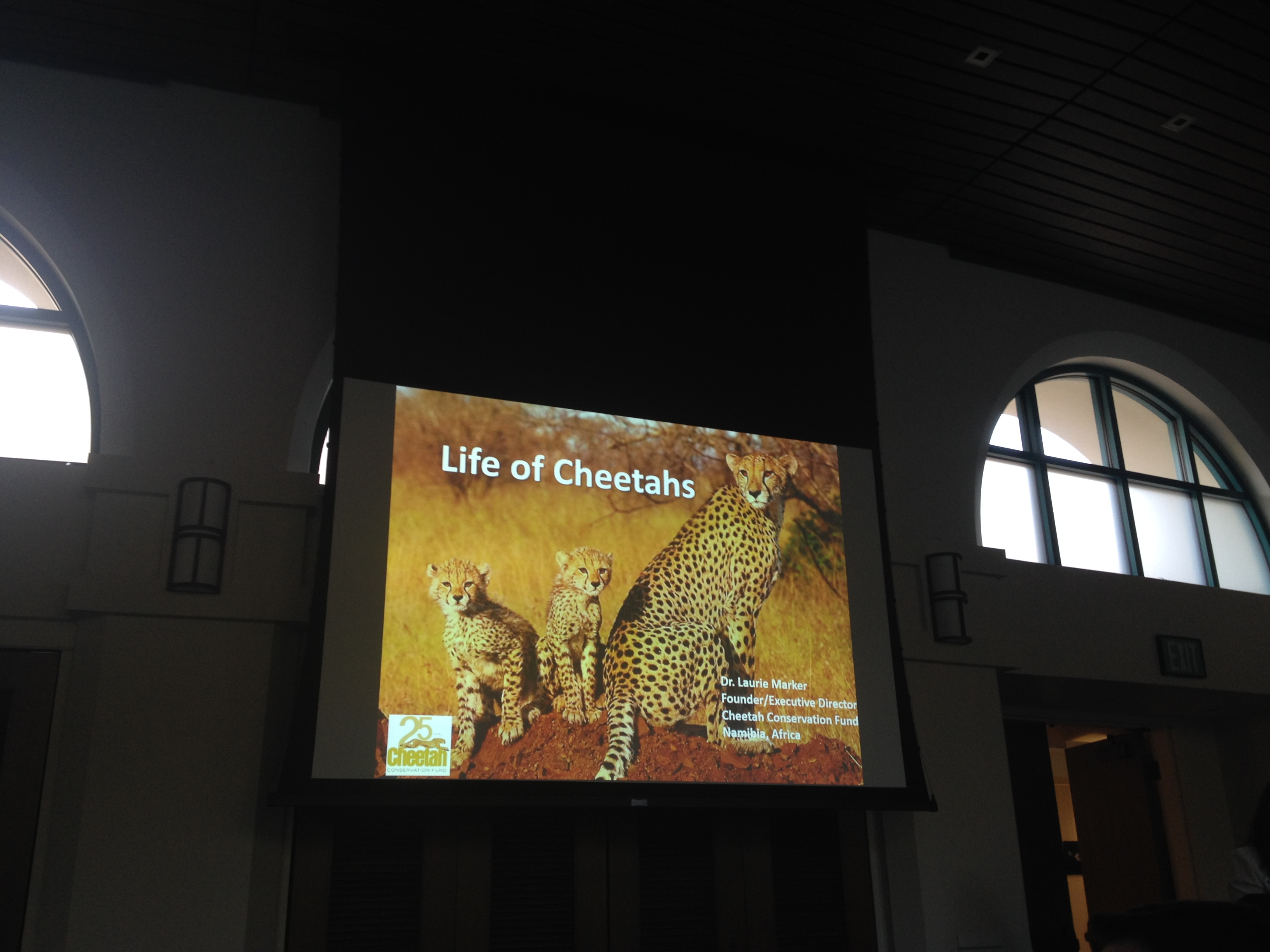 """Cats have tails to keep their cubs busy!"" -Dr. Laurie Marker Speaking during the lecture about cheetah babies."