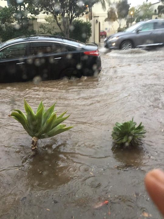 Water reached about two feet at times on Antacapa St. -A photo from Johni Hull
