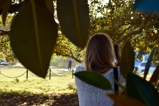 Getting the feeling of the fall under the Moreton Bay Fig. -- Marta Waldrop Bergman