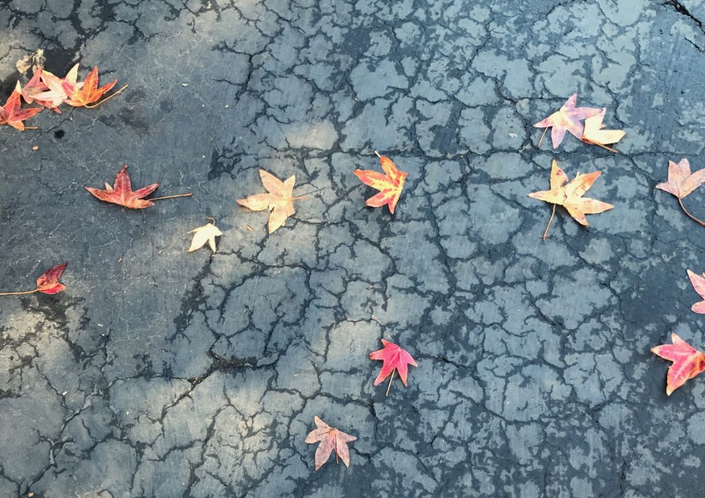 Little Autumn Leaves on Wet Pavement - A Big Thanksgiving Week Blessing in Thirsty Santa Barbara - Bronwyn Wallace