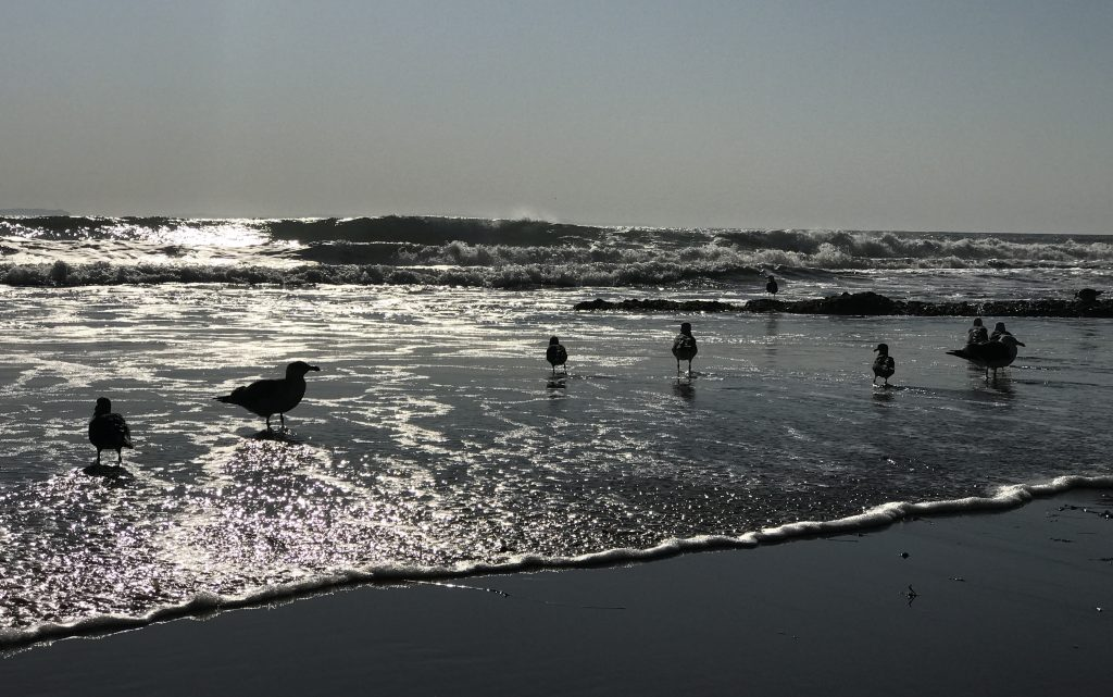 Silverlight and Seagulls in Shadow: The Santa Barbara Waters at Breamar Sparkle -Bronwyn Wallace